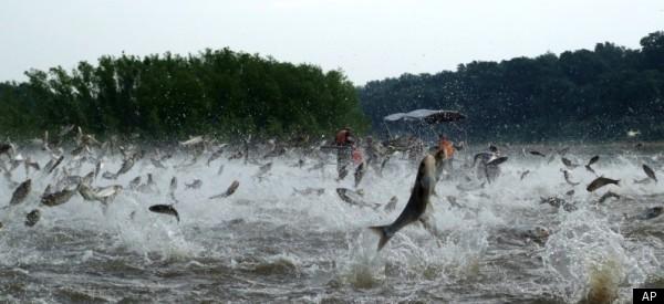Asian Carp Shooting