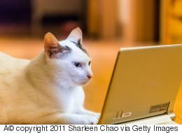 En 2017, les chats seront plus connectés