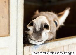 Les ânes sont loin d'être bêtes, la preuve...