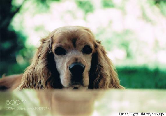 grieving a pet