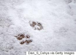 Cat And Dog Found Abandoned In Freezing Calgary Storage Unit