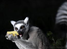 Le zoo de Rome a trouvé une solution originale pour réchauffer les animaux