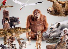 La BBC fabrique 30 robots-animaux pour filmer de plus près les animaux sauvages