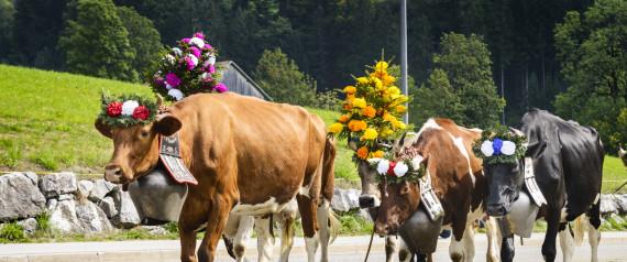 COWS SWITZERLAND BELL