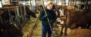 COW FEMALE FARMER