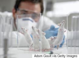 Des souris transformées en féroces prédateurs en stimulant une zone de leur cerveau