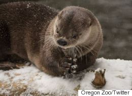 Zoo Animals Lose Their Cool Over Freshly Fallen Snow