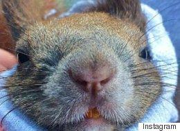 Cet écureuil trouvé sous un arbre a la belle vie