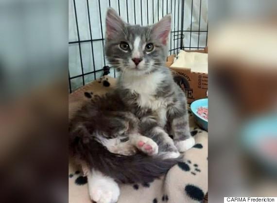 ajax kitten