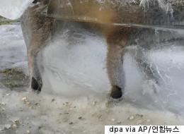자연의 잔인함을 보여주는 어느 여우의 사체(사진)
