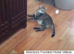 이 고양이의 게으름은 인간의 상식 밖이다