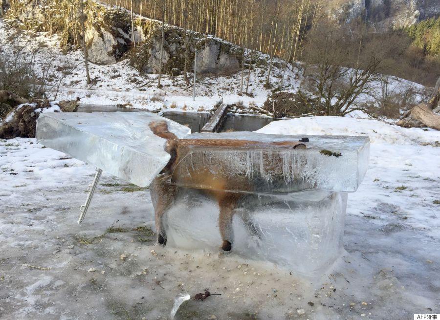 frozenfox