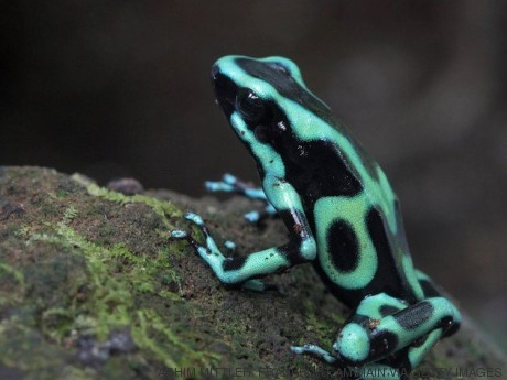 frog costa rica nissan