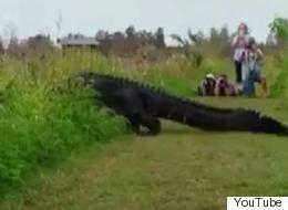 Γιγαντιαίος αλιγάτορας αφήνει άφωνους τους τουρίστες στην Φλόριντα