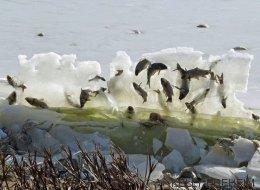 La historia detrás de estos peces congelados en una pared de hielo