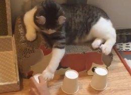 هل تصدِّق أن هذا القط قد يتفوَّق عليك؟.. جرب بنفسك