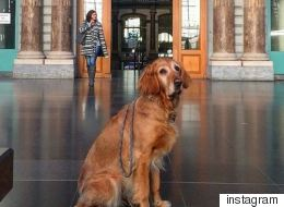 «Sad Dogs Outside Shops»: Ο λογαριασμός του Instagram που όλοι οι ζωόφιλοι πρέπει να ακολουθήσουν