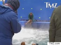 Maltraitance animale: annulation de la première du film «Mes vies de chien»