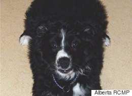 3 Weeks After Car Rollover, Lost Alberta Dog Returns
