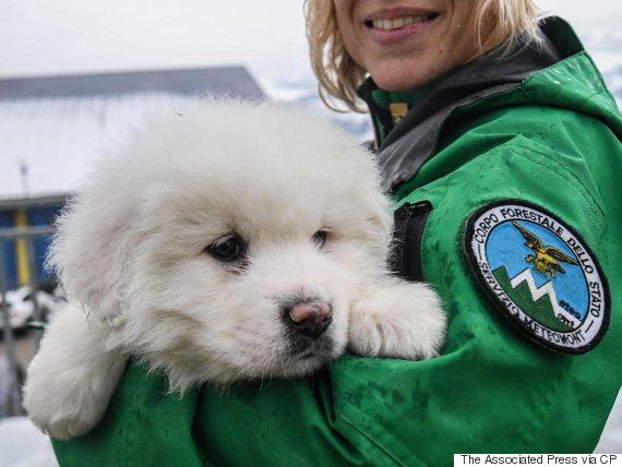 puppy italy hotel avalanche