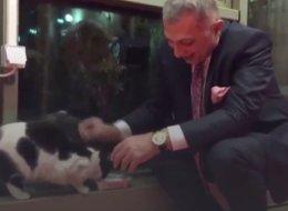 قطة اقتحمت البرلمان التركي.. فكيف تصرف النواب معها؟