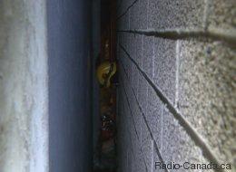Un homme chute de 3 étages et reste coincé entre deux murs