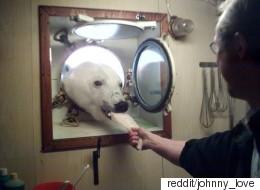 북극곰이 과학자들과 애프터눈 티를 즐겼다(사진)