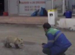 ليست القطط والكلاب فقط.. الأتراك يطعمون أيضاً الحيوانات البرية