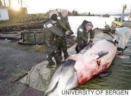 노르웨이 해안에 쓸려온 고래의 뱃속은 끔찍했다