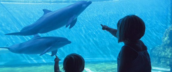 DOLPHINS CAPTIVATION