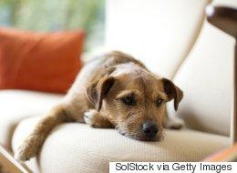 6 articles de maison courants, mais très toxiques pour les chiens