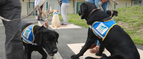 DOG GUIDE BLIND