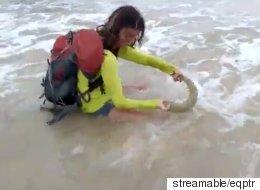 새끼 상어와 셀카를 찍은 관광객이 엄청난 벌금을 물게 됐다