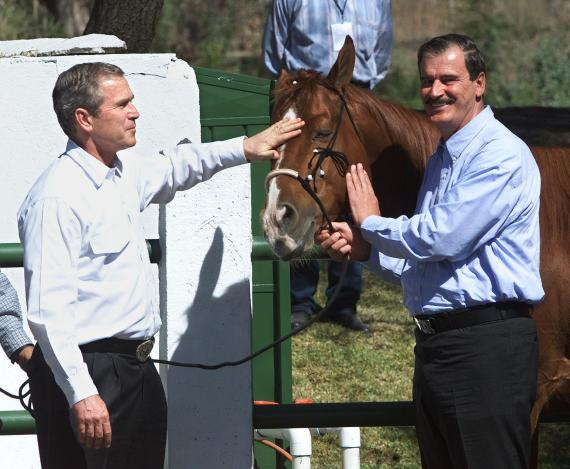 president bush horses
