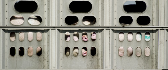 PIG TRANSPORTATION CANADA