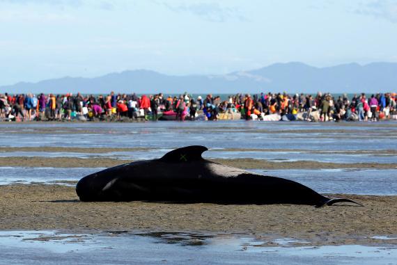 newzealand whales