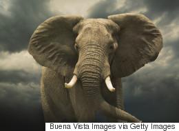 조선시대에 궁에서 키우던 코끼리가 귀양을 간 이유