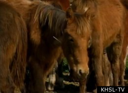 Baby Horses Rescued