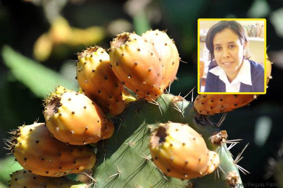 barbary figs