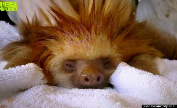 meet the sloths documentary 2