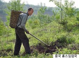 백두산 일대에 30년 동안 나무를 심은 노인