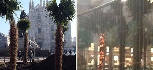 Bruciate in piazza Duomo 3 palme della discordia