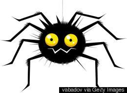 당신이 무서워하는 모든 게 담긴 '거미 대 뱀' 동영상