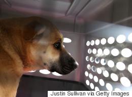 샌프란시스코, '강아지 공장' 개 판매 금지법 통과