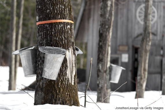 maple syrup quebec