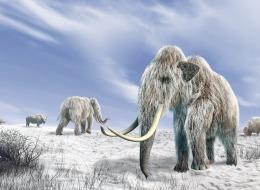 بعد انقراضه من 4500 عام.. علماء بـ