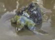 Vos vêtements, votre auto et la «soupe plastique» qui pollue les océans