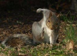 Cet écureuil vraiment «badass» vaut le détour(nement)