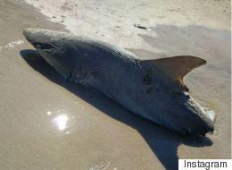 Μυστήριο γύρω από μισοφαγωμένο καρχαρία στην Φλόριντα. «Του επιτέθηκε μεγαλύτερο ψάρι»