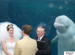 Ce photobomb de mariage par un béluga fait rire